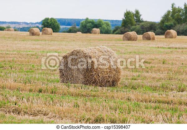 Straw Haystacks on the grain field - csp15398407