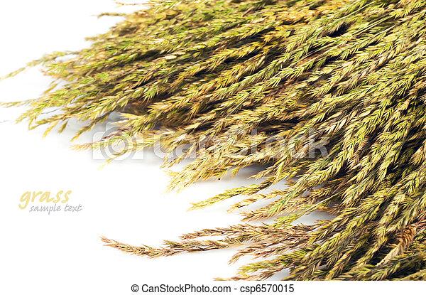 straw  - csp6570015