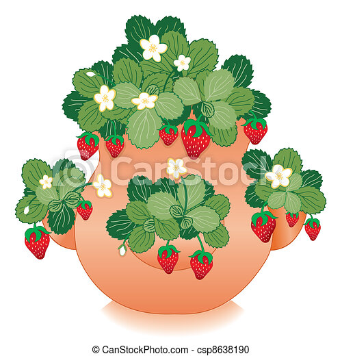 Strawberries in Clay Strawberry Jar - csp8638190