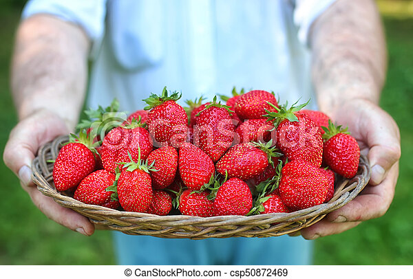 strawberries in his outstretched hand - csp50872469