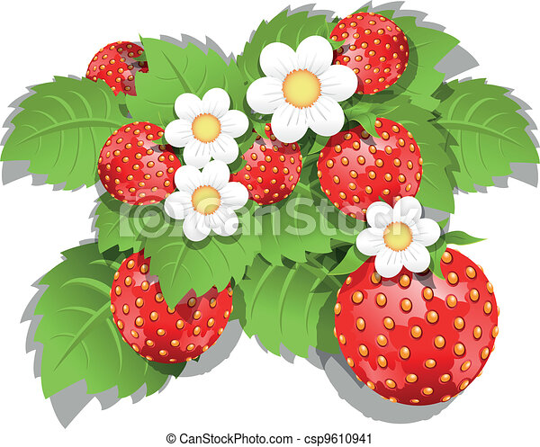 strawberry bush - csp9610941