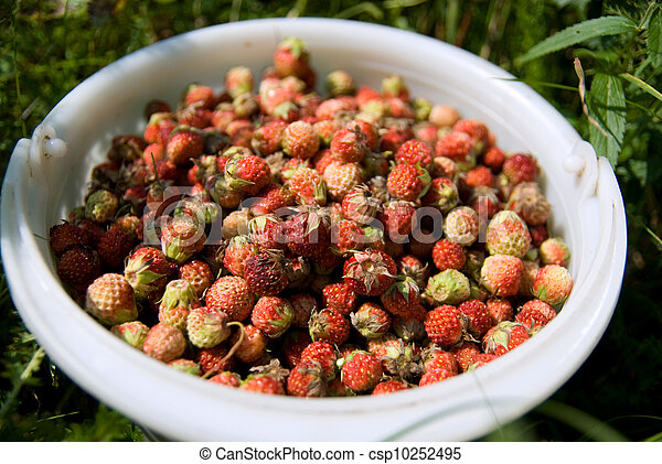 Strawberry in a bucket - csp10252495