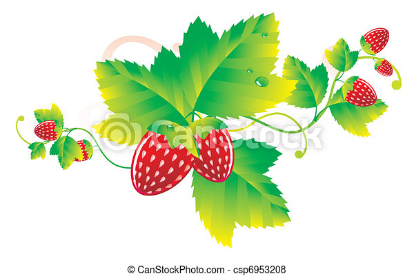 strawberry leaves with berries - csp6953208