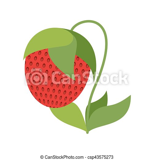 Strawberry on bush isolated. Red berries on white background - csp43575273