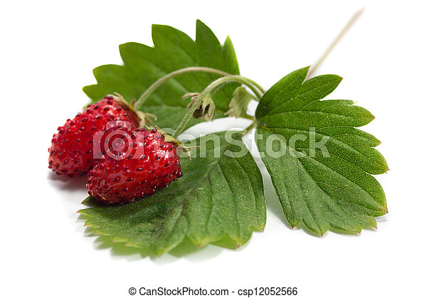 strawberry - csp12052566