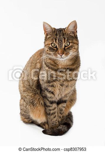 Stray cat - csp8307953
