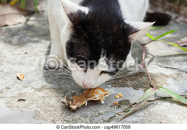 Stray cats eat fish bones in thailand stock images for Can cats eat raw fish