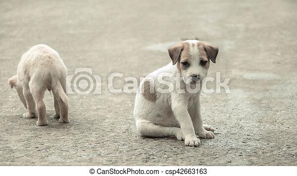 Stray dog hungry food - csp42663163
