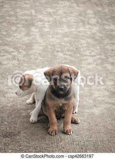 Stray dog hungry food - csp42663197
