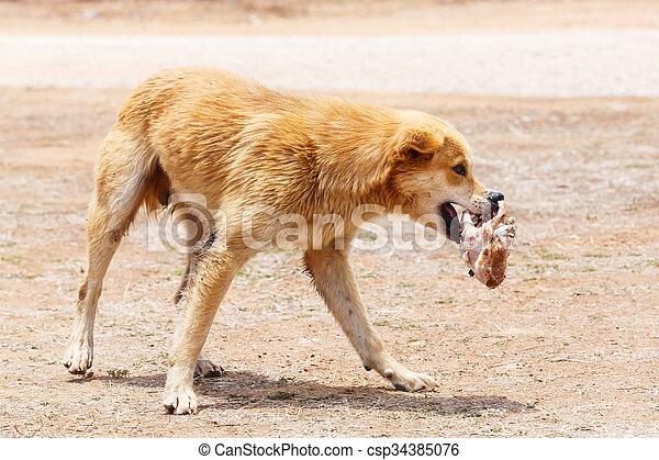 Stray dog - csp34385076