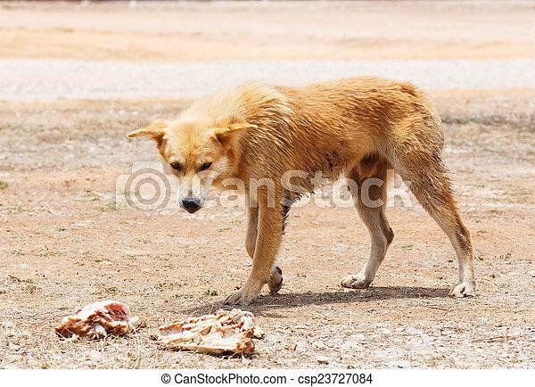 Stray dog - csp23727084