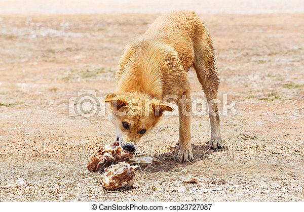 Stray dog - csp23727087