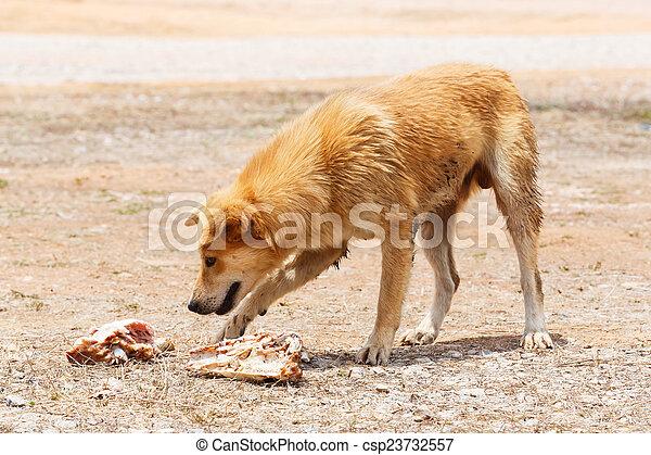 Stray dog - csp23732557