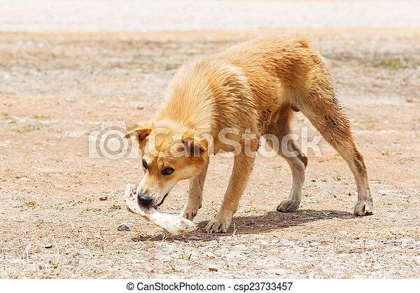 Stray dog - csp23733457