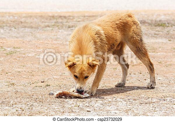 Stray dog - csp23732029