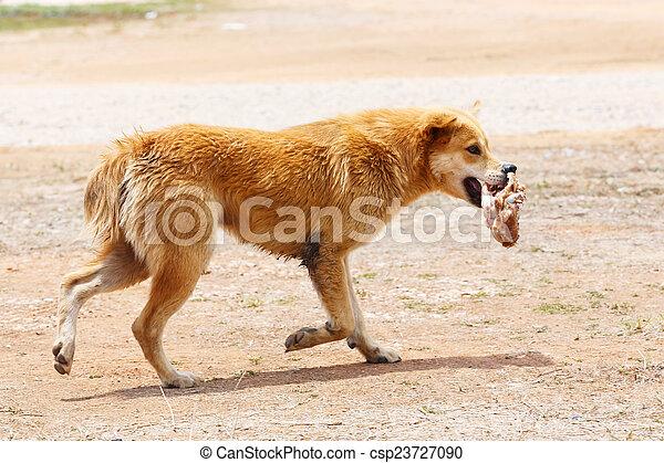 Stray dog - csp23727090