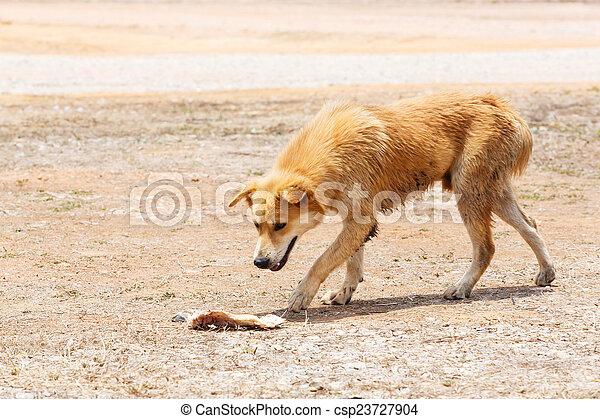 Stray dog - csp23727904