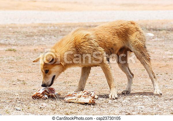 Stray dog - csp23730105
