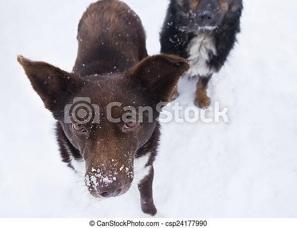 Stray Hungry Dog - csp24177990