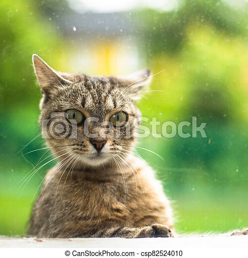 Street cat looks surprised in the window the house. - csp82524010