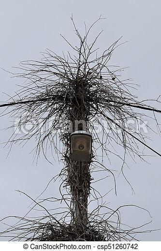 street light branches - csp51260742