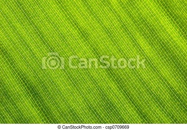Strelitzia Leaf - csp0709669