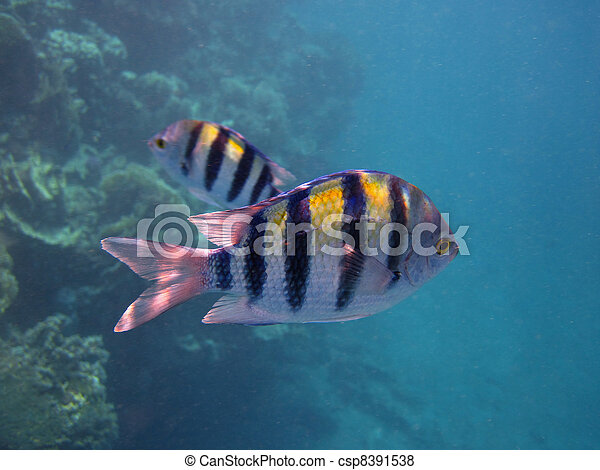 Answer, striped fish images similar situation