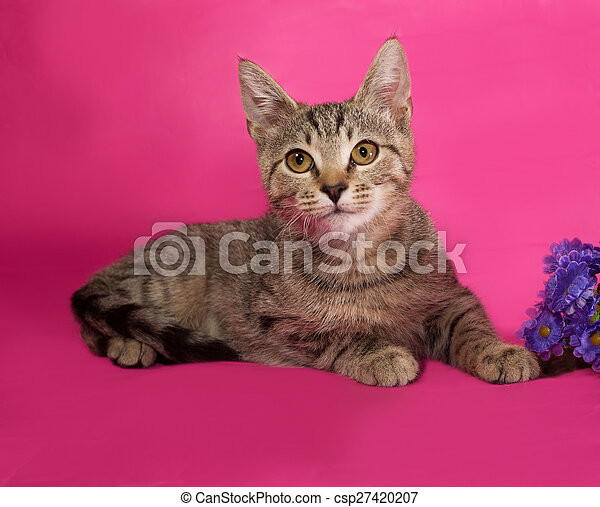 Striped kitten with bouquet of flowers lying on pink - csp27420207