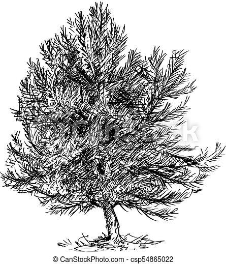 Strom Borovice Kresleni Vektor Jehlicnaty Strom Karikatura