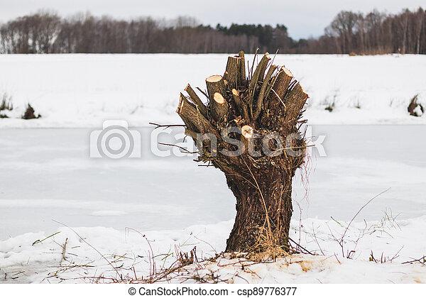 strom, sněžit, zima, strom, dobrý stav, vrba - csp89776377