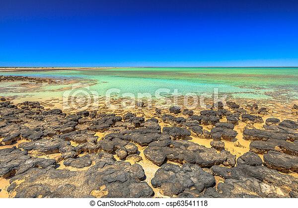 Stromatolites at Hamelin Pool - csp63541118