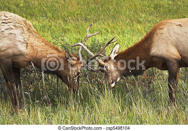 stronger?, deux, deers - csp5498104