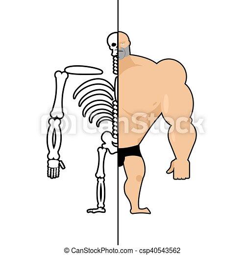 Structure Esqueleto Skull System Bodybuilder Atleta Organs Anatomía Athlete Men Interno Humano Huesos Construcción Hueso