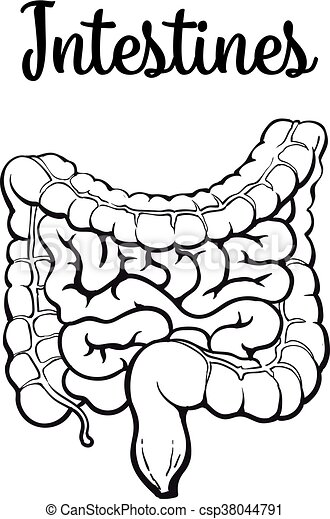 Structure Of The Human Colon Vector Sketch Hand Drawn Illustration
