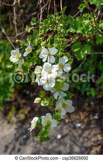 Struiken Met Bloemen Voor In De Tuin.Struik Bloemen Witte