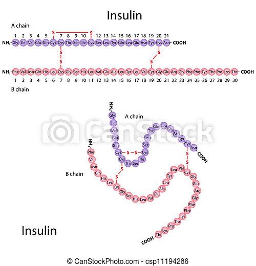 struktur, insulin, mänsklig, eps8 - csp11194286