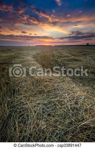 Stubble field landscape - csp33891447