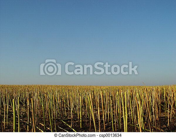 stubble field - csp0013634