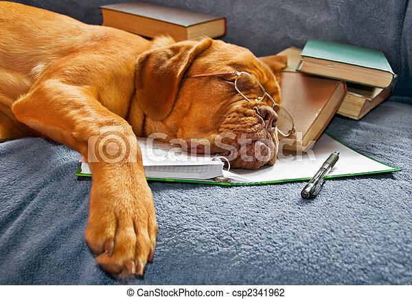studieren, nach, hund, eingeschlafen - csp2341962