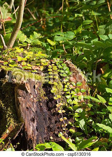 stump in the grass - csp5130316