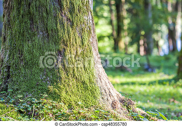 Stump with moss in autumn forest. Old tree stump covered with moss in the coniferous forest, beautiful landscape. Soft light effect. Green nature concept - csp48355780