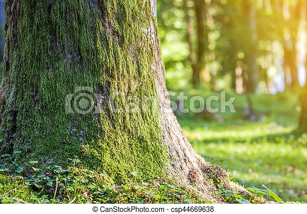 Stump with moss in autumn forest. Old tree stump covered with moss in the coniferous forest, beautiful landscape. Soft light effect. Green nature concept - csp44669638