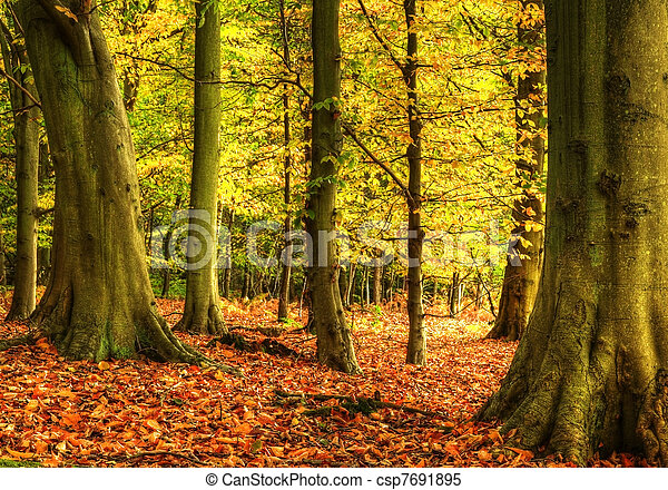 Stunning colorful vibrant Autumn Fall forest landscape - csp7691895