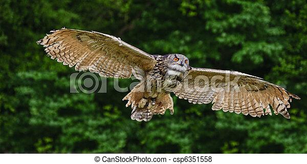 Stunning European eagle owl in flight - csp6351558
