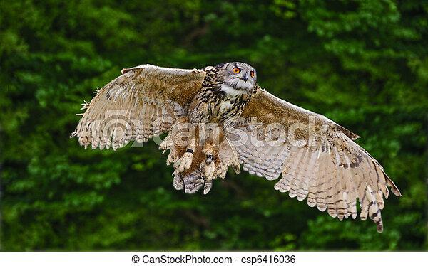 Stunning European eagle owl in flight - csp6416036