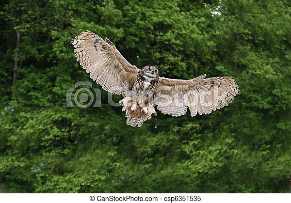 Stunning European eagle owl in flight - csp6351535