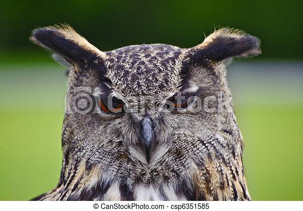 Stunning European eagle owl in flight - csp6351585