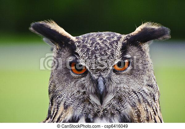 Stunning European eagle owl in flight - csp6416049
