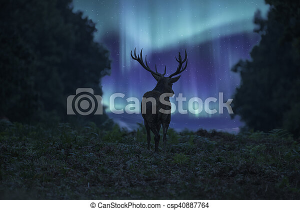 Stunning landscape image of red deer stag silhouetted against Northern Lights Aurora Borealis night sky - csp40887764