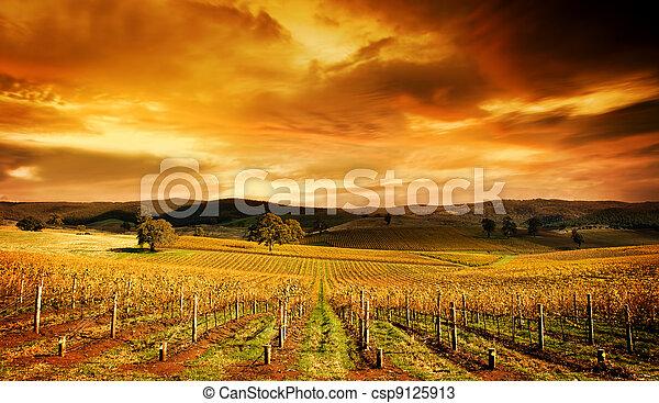 Stunning Vineyard - csp9125913